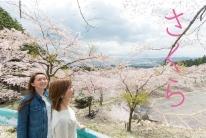 さくら1,000本、1,500m桜並木!